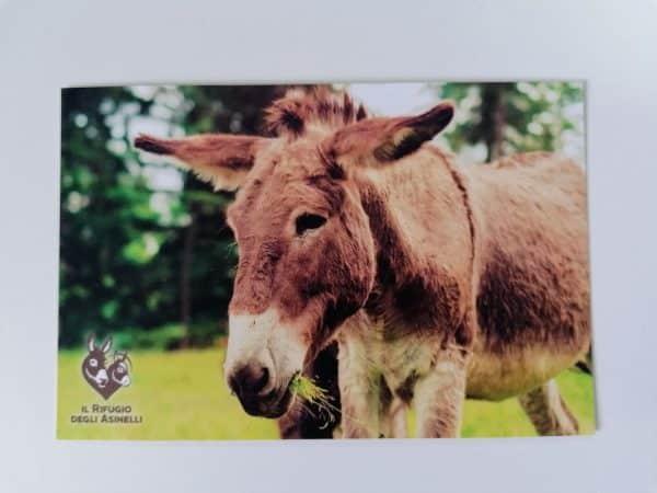 Cartolina con immagine asinello Ardito e logo de Il Rifugio degli Asinelli