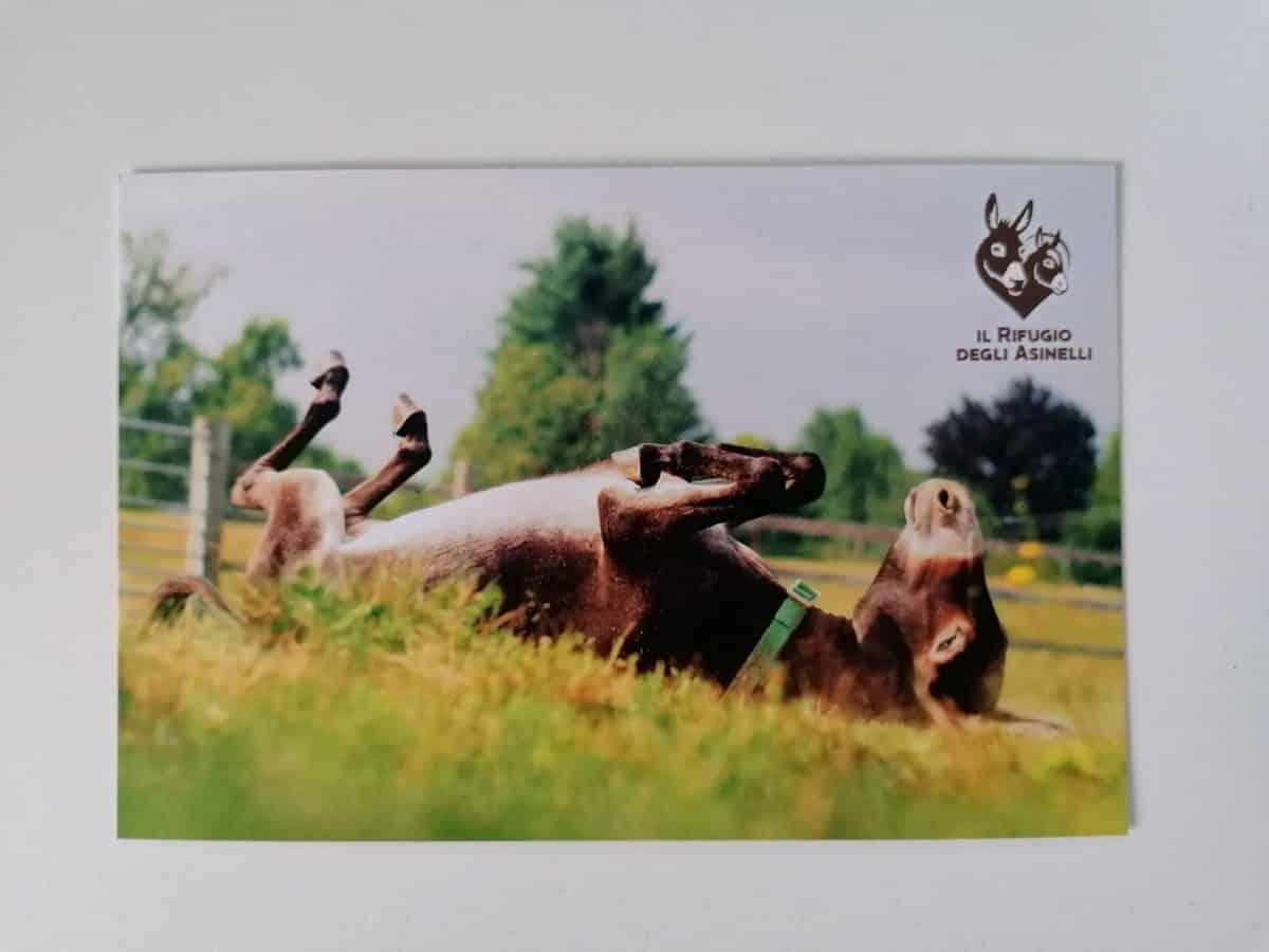 Cartolina con immagine dell'asinella Clementina e logo de Il Rifugio degli Asinelli