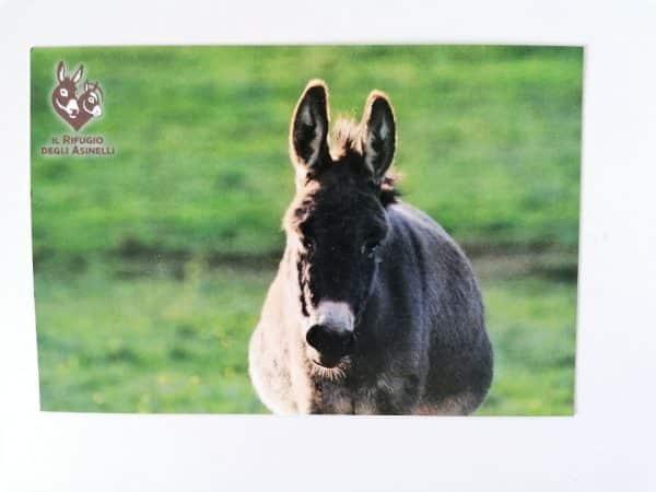 Cartolina con immagine asinella Ombra e logo Il Rifugio degli Asinelli